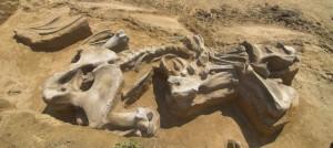 mammoth-20140630-001